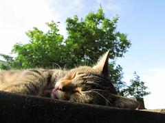 Teddy enjoying the sun* (love_fotografie) Tags: herbst014