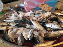 """Il est frais mon petit poisson du Mekong <a style=""""margin-left:10px; font-size:0.8em;"""" href=""""http://www.flickr.com/photos/83080376@N03/15889599396/"""" target=""""_blank"""">@flickr</a>"""