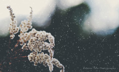 Winter (Desireetate) Tags: winter snow blur cold color green nature beautiful beauty photoshop canon outdoors evening colorful december adobephotoshop bokeh dream dreams p lovely canondslr admiring naturephotography markiii canon5dmarkiii photoshopcc desireetatephotography desireetate