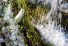 Le_forme_della_Natura (Danilo Mazzanti) Tags: gelo erba acqua colori freddo danilo ghiaccio cascata mazzanti ghiaccioli danilomazzanti wwwdanilomazzantiit