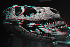 T-Rex-Head-Line-Up-3D-04-100%-Anaglyph-(red-cyan-glasses-required) (Aaron & Radhika) Tags: camera new light red white black blur history archaeology monochrome up wall museum contrast photoshop dark skulls photography fossil skull glasses three stereoscopic 3d nikon darkness post dinosaur background space aaron group cyan anaglyph monochromatic line sharp stereo zealand photograph adobe mounted heads wellington bones third papa bone spatial te dslr rex processed depth dinosaurs fossils foreground tyrannosaurus dimensions dimensional cs5 openshaw d3100