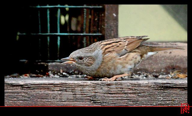 « Sans lironie, LE MONDE serait comme une forêt sans oiseaux. »