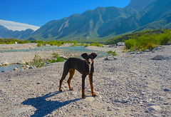 It's a Dog's World (rasdiggity) Tags: sky dog mountains river mexico huasteca lahuasteca nuevoleón dogsworld russellsticklor rasdiggity
