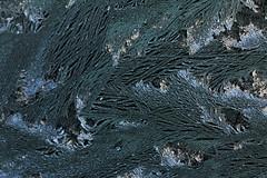 Frostwork -  Eisblumen (gripspix (catching up slowly)) Tags: texture ice frost eis eisblumen textur frostwork 20150106