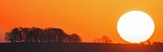 Sunrise, Cotswolds, Gloucestershire (Kumweni) Tags: uk morning trees red england orange sun english sunrise landscape countryside minolta britain g sony country hill cotswolds gloucestershire apo f45 disk british alpha rise mkii a77 400mm kumweni