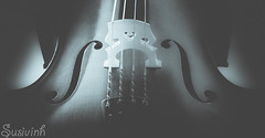 Cello - 13:365 (susivinh) Tags: music cello strings cuerdas violoncello