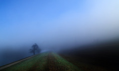 One way or another (Robyn Hooz (away)) Tags: light shadow tree grass fog way canal path ground erba soil nebbia albero canale padova suolo