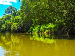 DSCN0687 (vhenryz) Tags: park trip trees sky cloud reflection nature water clouds forest river reserve calm national mangrove jungle brunei ulu temburong