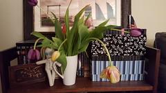 Voodoo tulips (armykat) Tags: stilllife tulips bookshelf movies voodoodoll tulipalooza2016