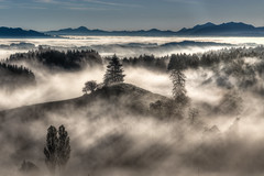 bei Hauptmannsgreut / Allgu (klaus72) Tags: mist mountains fog sunrise landscape bayern bavaria nebel hill herbst hills berge sunrays landschaft sonnenaufgang sonnenstrahlen dunst allgu hgel kempten sunris hauptmannsgreut