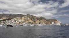 Sailing into Avalon (Jodi Newell) Tags: ocean water skyline clouds canon boats harbor casino hills shore catalinaisland avalon jodinewell jodisjourneys jodisjourneysphotosgmailcom