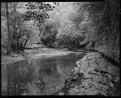 rock ledge, howard's creek, clark co, kentucky (mike thomas) Tags: county bw film beauty creek landscape woods kentucky ky large super 400 clark 4x5 format rodinal 120mm schneider fomapan symmar arcaswiss