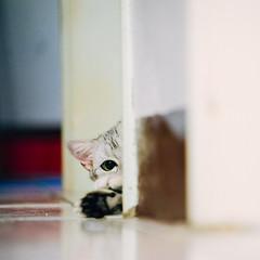 (ChCh Chen) Tags: cats cat kitten kitty