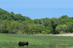 4Ikari Field Farm (anglo10) Tags: field japan kyoto seashore