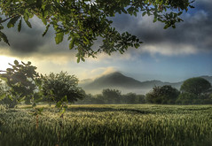 Landscape with Babadag (VillaRhapsody) Tags: morning trees mist mountain green field fog rural sunrise dawn spring foggy springtime fethiye chickpeas babadag kayaky