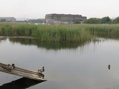 Ducks (Paul McNamara) Tags: ireland wicklow arklow