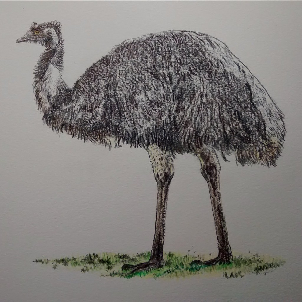 how to draw a emu bird