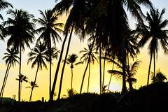 Palms (Jorge Hamilton) Tags: bahia brasil brazil praia do forte arco ris rainbow lua luar farol beach moolight jorgehamilton brandao brando