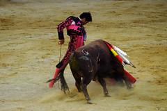 Cayetano (Fotomondeo) Tags: espaa spain bull alicante bullfighter toros bullfight toro bullring matador torero plazadetoros alacant corridadetoros fogueres hogueras hoguerasdesanjuan cayetano cayetanoriveraordez fujifilmxm1