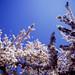 Beautiful blossom - part 5