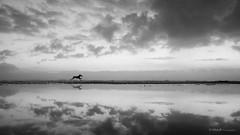 No Limit (VitorJK) Tags: sea sky cloud dog reflection art beach portugal water animal canon freedom no run atlantic pt limit vitor figueira foz g11 junqueira vitorjk