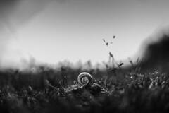 Forgotten (ayashok photography) Tags: bw india nature asian dead 50mm blackwhite nikon asia indian fineart 14 shell snail desi nikkor bnw bharat bharath desh barat naturesfinest barath nikonstunninggallery d700 ayashok mamandur chengelpet ayashokphotography ayp1363