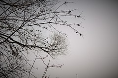 Winter Sky (alysonny) Tags: trees winter sky black cold beautiful forest grey sticks woods gray branchs