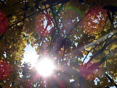 I love the Autumn colors with sun rays. (kennethkonica) Tags: people usa men sports hockey america canon women midwest action indianapolis indy indiana hoosiers canonpowershot sx50hs indyfuel