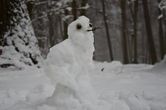 DSC_1857 eine Schnee-Eule im Schnee...??? - a snowy owl in the snow ... ??? (baerli08ww) Tags: schnee winter snow forest germany deutschland wald rheinlandpfalz westerwald rhinelandpalatinate nikond5100 westerforest