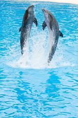 DSC_9442 (PiotrekSmyk) Tags: parque nikon dolphins tenerife nikkor loro 70300vr d7000 piotreksmyk