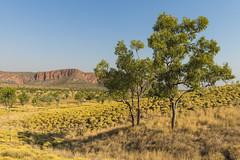 Kungkalanayi Lookout, Purnululu National Park/Bungle Bungle Range, Kimberly Region, Western Australia (Strabanephotos) Tags: park australia lookout national western kimberly region bungle range purnululu kungkalanayi