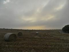 Scotish crops at dusk (Miguel Castrillo Melguizo) Tags: sunset atardecer scotland twilight dusk escocia campo cultivos crops ocaso
