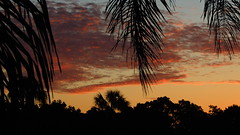 October 9th Sunrise (Jim Mullhaupt) Tags: morning red wallpaper sky orange color silhouette yellow clouds sunrise palms landscape nikon flickr florida tropical coolpix bradenton p510 mullhaupt cloudsstormssunsetssunrises jimmullhaupt