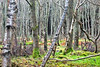 Woods near Cullen, Moray (Troonafish) Tags: trees winter tree nature forest landscape scotland woods wildlife branches lichen twigs moray cullen morayfirth morayshire moraycoast gavtroon gavintroon