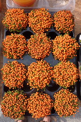 Kyrenia Market - plant pots (muffinn) Tags: spice lpspice