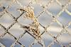 Don't fence me in (kaffealskare) Tags: snow grass fence grid frozen straw frosty diamondpattern