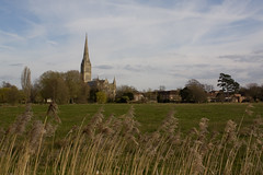 Salisbury - the cathedral (grotevriendelijkereus) Tags: england tower field cathedral britain great gothic medieval spire pasture salisbury wiltshire