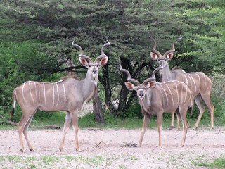 Botswana Hunting Safari 59