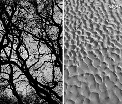 Autumn vibes: art of nature (luxfotografie) Tags: autumn light sea white black tree art fall beach nature netherlands rain contrast digital forest season happy photography sand woods soft waves fotografie wind kunst branches sony herfst nederland shell natuur peaceful double zen haunting vs vibes alpha dslr bos lux schelp silhouet peacefull