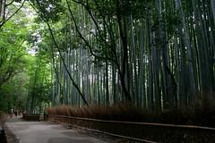 Arashiyama - Il bosco di bambù (*maya*) Tags: wood japan forest kyoto grove bamboo arashiyama giappone bosco foresta bamboogrove bambù