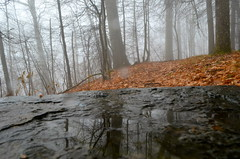 Weather (esywlkr) Tags: mist reflection rain weather fog nc hike trail smokies wnc greatsmokymountainsnationalpark gsmnp warrenreed nolanddividetrail