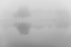 Dim memories (Mindaugas Buivydas) Tags: winter bw mood moody delta minimal minimalism rusne nemunasdelta sadnature skirvyt skirvyte nemunasdeltaregionalpark