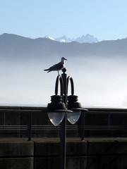 IMG_2825 (Villasfrias) Tags: farola asturias gaviota niebla colunga lastres picosdeeuropa torrecerredo