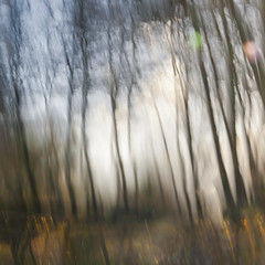 Light between trees (Mariette van Waard) Tags: world trees light motion blur nature other movement time shutter universe parallel icm mysterie intentionalcameramovement