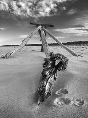 Sculpture Three  B&W (caralan393) Tags: bw beach three phone structure driftwood poles