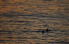 Toninas (respinoza_22) Tags: atardecer mar niebla toninas