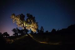 THE HOLY TREE (Der_Golem_) Tags: arbol cielo linares campo solitario 2016 linterna largaexposicion viaverde contaminacionluminica