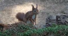DSC08442rawcon_a (ger hadem) Tags: veluwe zwijn eekhoorn gerhadem