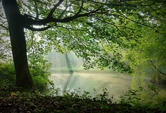 2016-05-13 Secret wood (29)mist (april-mo) Tags: wood trees mist water misty mystery pond mysterious brume mistymorning brumeux
