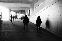 in a world of concrete (gato-gato-gato) Tags: street leica bw white black classic film blanco monochrome analog 35mm person schweiz switzerland flickr noir suisse strasse zurich negro streetphotography pedestrian rangefinder human streetphoto manual monochrom zrich svizzera weiss zuerich blanc ilford m6 manualfocus analogphotography schwarz ch wetzlar onthestreets passant mensch sviss leicam6 zwitserland isvire zurigo filmphotography streetphotographer homedeveloped fussgnger manualmode zueri strase filmisnotdead streetpic messsucher manuellerfokus gatogatogato fusgnger leicasummiluxm35mmf14 gatogatogatoch wwwgatogatogatoch streettogs believeinfilm tobiasgaulkech